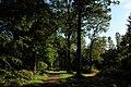 Forêt de Stambruges 22.jpg
