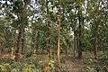 Forest - Shaktinagar - Dhenkanal 2018-01-25 9835.JPG