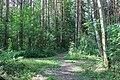 Forest - panoramio (65).jpg