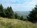 Forest Edge - geograph.org.uk - 577553.jpg