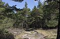 Forest Trail, Saint-Martin-de-l'Arçon, Hérault.jpg