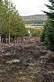 Forest firebreak in Blairmore Estate - geograph.org.uk - 1773935.jpg
