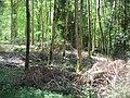 Forest floor - geograph.org.uk - 1672150.jpg