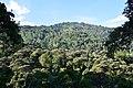 Forest of Rwenzori.jpg