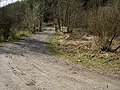Forestry Track - geograph.org.uk - 149303.jpg