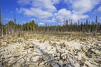 Poor fen - The development of fen (mesotrophic) swamp forests during the dry season. Summer 2018. A strong decrease of groundwater level and the feed stream. In the climatic zone (taiga, forest tundra) of the Arkhangelsk region.