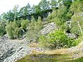 Former Slate Quarry, Moss Rigg Wood - geograph.org.uk - 49580.jpg
