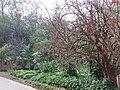 Foto do Parque Aclimação SP. Jardim.jpg