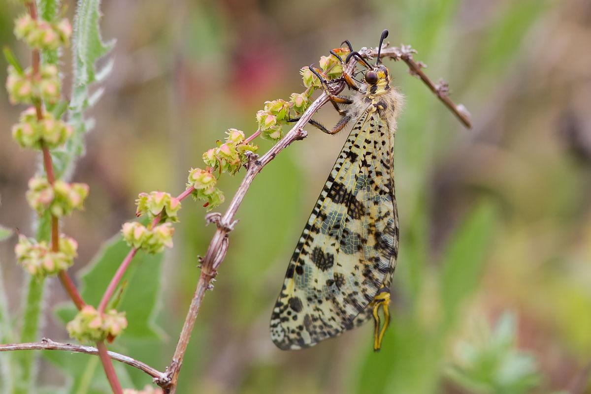 insecte a manger