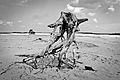 Freaky Roots (6953362854).jpg