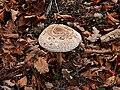 Funghi riserva 3.jpg