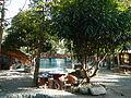 Gabaldon,NuevaEcijajf9409 14.JPG