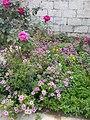 Garden's 11.jpg