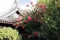 Garden (4173371683).jpg