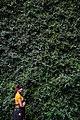 Garden of Melancholy.jpg