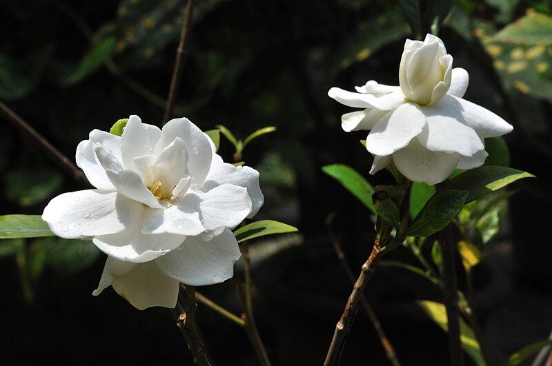 11 Best Bedroom Plants That Will Help You Sleep - Gardenia