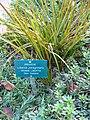Gardenology.org-IMG 2599 ucla09.jpg