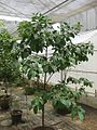 Gardenology.org-IMG 8108 qsbg11mar.jpg