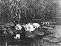 Gerardina Jacoba van de Sande Bakhuyzen - Waterlelies - SA 2914 - Amsterdam Museum.jpg