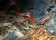 Gfp-red-mountain-racer.jpg