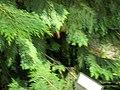 Giardino botanico di Brera (Milan) 324.jpg