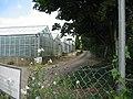 Glasshouses on Glaston Road, Uppingham - geograph.org.uk - 45176.jpg