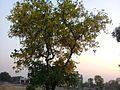 Golden magical tree.jpg
