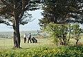Golf, Lundin Links - geograph.org.uk - 788878.jpg