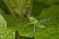 Grasshopper-pjt3.jpg