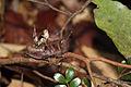 Grasshoppers Anjavavy.jpg