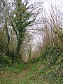 Green lane on the Ridge - geograph.org.uk - 1178760.jpg