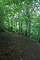 Greenway Wood - geograph.org.uk - 879846.jpg