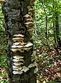 Grenchenberg - Fungi.jpg