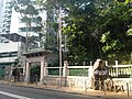 HKU 港大 near 香港島 半山區 Mid-Levels 般咸道 Bonham Road 老榕樹 old banyan trees May 2018 LGM 樹木辦 after cutting 修前後 01.jpg