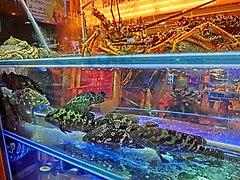 Fish And Lobster At The Shamrock Hotel Seafood Restaurant In Nathan Road Jordan Hong Kong