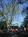 Hachiman Shrine (八幡神社) - panoramio (1).jpg
