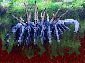 Hallucigenia aus dem mittelkambrischen Burgess-Schiefer