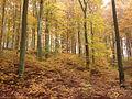 Herbstwald bei Hülshof Gem. Bad Endbach.jpg