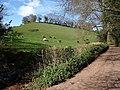 Higher Ramshill Lane - geograph.org.uk - 757949.jpg