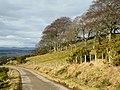 Hillside above Nigg - geograph.org.uk - 1710535.jpg