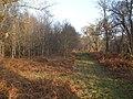 Holly grove wood - geograph.org.uk - 1095718.jpg