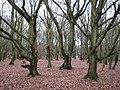 Horley, Riverside Garden Park - geograph.org.uk - 1184033.jpg