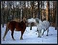 Horse - fighter - panoramio.jpg