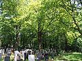 Huetteldorfer Friedhof alter Baumbestand.jpg