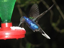 Hummingbird at feeder.jpg