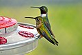 Hummingbirds (7699573232).jpg