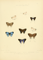 Illustrations Diurnal Lepidoptera 2 - Plate 23.png