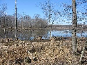 Image-Great Swamp National Wildlife Refuge New Jersey03.jpg
