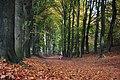 Impressive Beech lanes at Mariendaal Schaarsbergen-Oosterbeek in autumn colours - panoramio.jpg