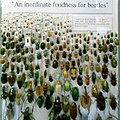 Inordinate fondness for beetles display.jpg